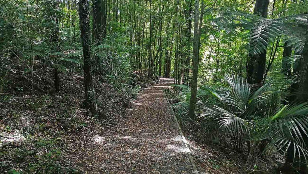 Monday Excursion: Mangakara Nature Walk